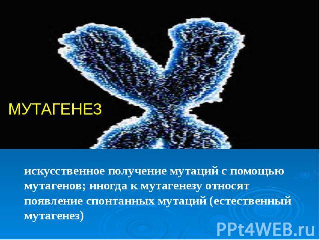искусственное получение мутаций с помощью мутагенов; иногда к мутагенезу относят появление спонтанных мутаций (естественный мутагенез)