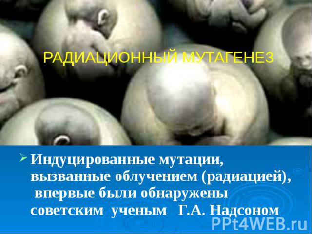 Индуцированные мутации, вызванные облучением (радиацией), впервые были обнаружены советским ученым Г.А. Надсоном Индуцированные мутации, вызванные облучением (радиацией), впервые были обнаружены советским ученым Г.А. Надсоном