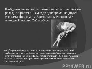 Возбудителем является чумная палочка (лат. Yersinia pestis), открытая в 1894 год