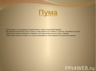 Пума Пумы обитают от юга Канады до Огненной Земли у самого конца Южной Америки.