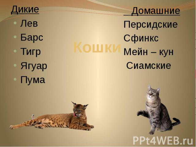 Кошки Дикие Лев Барс Тигр Ягуар Пума