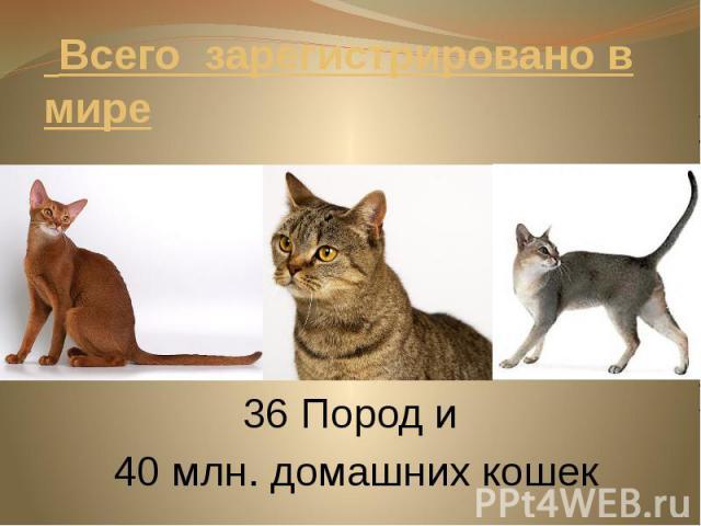 Всего зарегистрировано в мире 36 Пород и 40 млн. домашних кошек