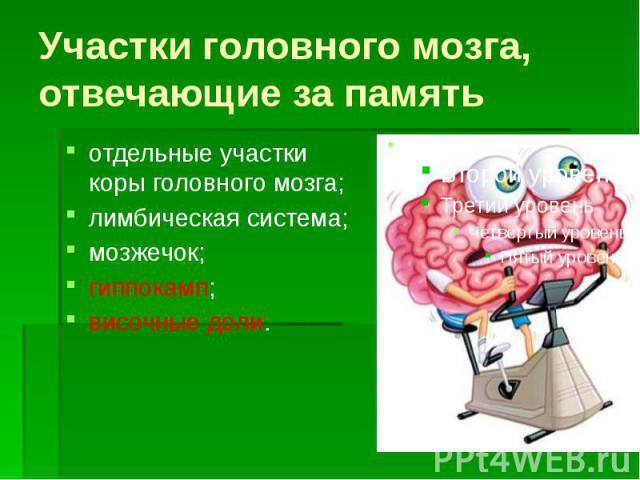 Участки головного мозга, отвечающие за память отдельные участки коры головного мозга; лимбическая система; мозжечок; гиппокамп; височные доли.