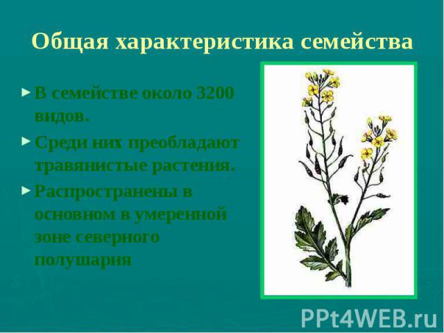Общая характеристика семейства В семействе около 3200 видов. Среди них преобладают травянистые растения. Распространены в основном в умеренной зоне северного полушария