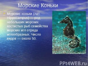 Морские Коньки Морские коньки (лат. Hippocampus) — род небольших морских костист