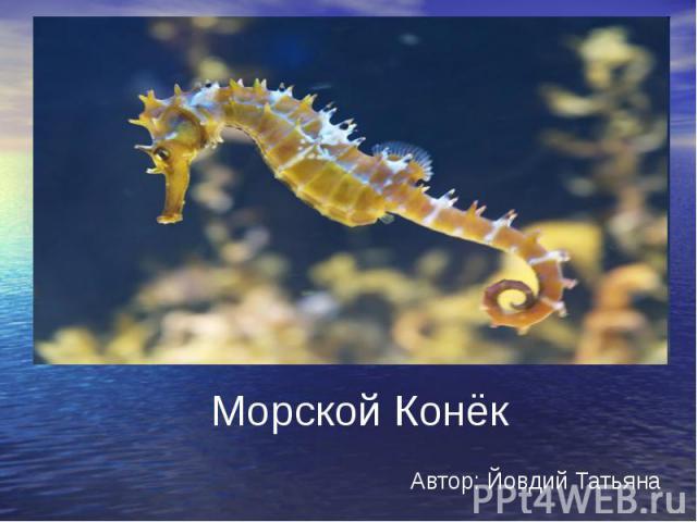 Морской Конёк Автор: Йовдий Татьяна