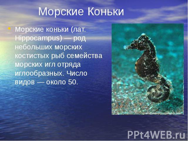 Морские Коньки Морские коньки (лат. Hippocampus) — род небольших морских костистых рыб семейства морских игл отряда иглообразных. Число видов — около 50.