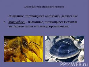 Способы гетеротрофного питания Животные, питающиеся голозойно, делятся на: Микро