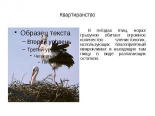 Квартиранство В гнёздах птиц, норах грызунов обитает огромное количество членист