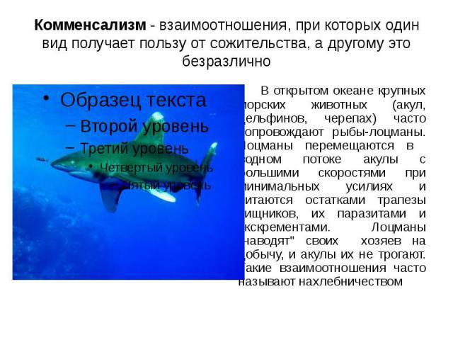 Комменсализм - взаимоотношения, при которых один вид получает пользу от сожительства, а другому это безразлично В открытом океане крупных морских животных (акул, дельфинов, черепах) часто сопровождают рыбы-лоцманы. Лоцманы перемещаются в водном пото…