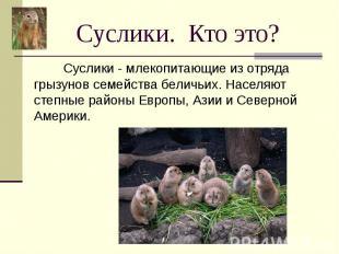 Суслики. Кто это? Суслики - млекопитающие из отряда грызунов семейства беличьих.