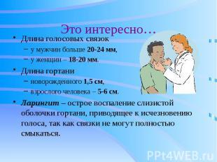 Это интересно… Длина голосовых связок у мужчин больше 20-24 мм, у женщин – 18-20
