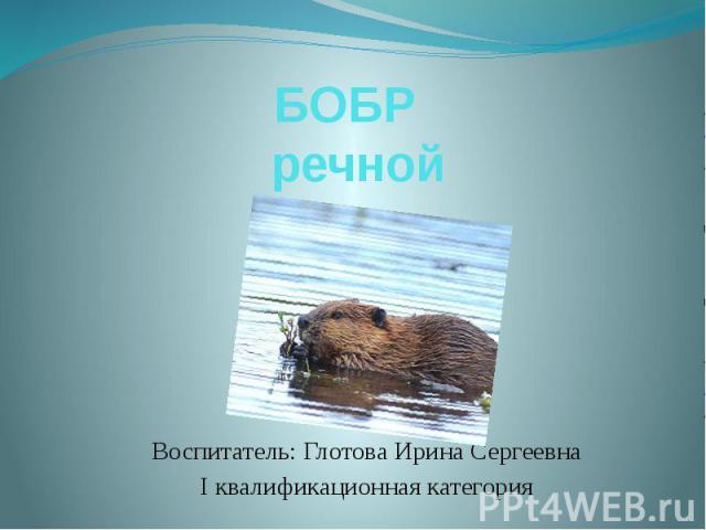 БОБР речной Воспитатель: Глотова Ирина Сергеевна I квалификационная категория