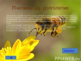 Пчелины яд- долголетие Если прополис способен защитить гнездо от бактерий и микр
