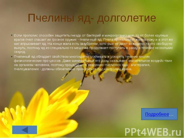 Пчелины яд- долголетие Если прополис способен защитить гнездо от бактерий и микроорганизмов, то от более крупных врагов пчел спасает их грозное оружие - пчелиный яд. Пчела прокалывает жалом кожу и в этот же миг впрыскивает яд. На конце жал…