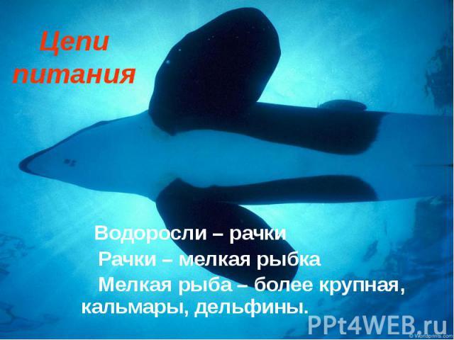 Цепи питания Водоросли – рачки Рачки – мелкая рыбка Мелкая рыба – более крупная, кальмары, дельфины.