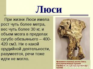 Люси При жизни Люси имела рост чуть более метра, вес чуть более 30 кг, и объем м
