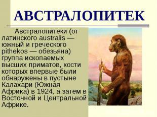 АВСТРАЛОПИТЕК Австралопитеки (от латинского australis— южный и греческого