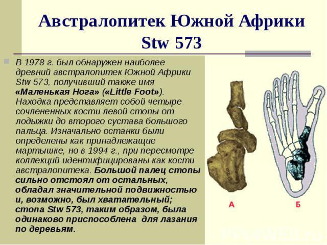 Австралопитек Южной Африки Stw 573 В 1978 г. был обнаружен наиболее древний австралопитек Южной Африки Stw 573, получивший также имя «Маленькая Нога» («Little Foot»). Находка представляет собой четыре сочлененных кости левой стопы от лодыжки до втор…