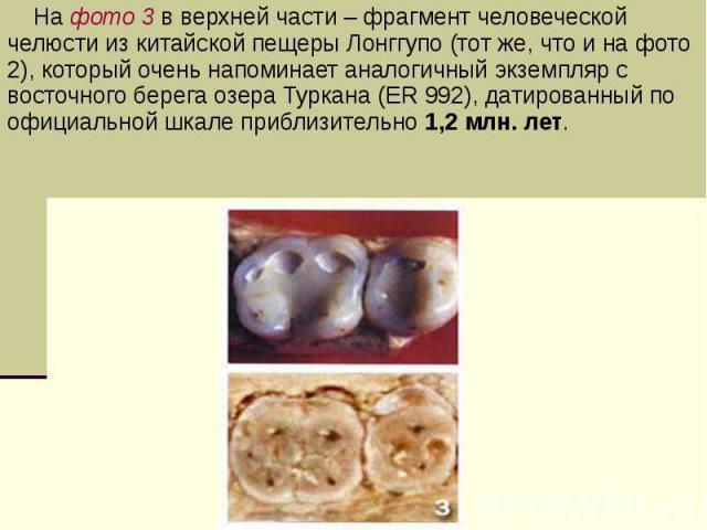 На фото 3 в верхней части – фрагмент человеческой челюсти из китайской пещеры Лонггупо (тот же, что и на фото 2), который очень напоминает аналогичный экземпляр с восточного берега озера Туркана (ER 992), датированный по официальной шкале приблизите…