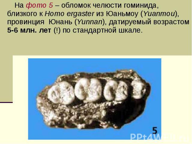 На фото 5 – обломок челюсти гоминида, близкого к Homo ergaster из Юаньмоу (Yuanmou), провинция Юнань (Yunnan), датируемый возрастом 5-6 млн. лет (!) по стандартной шкале.