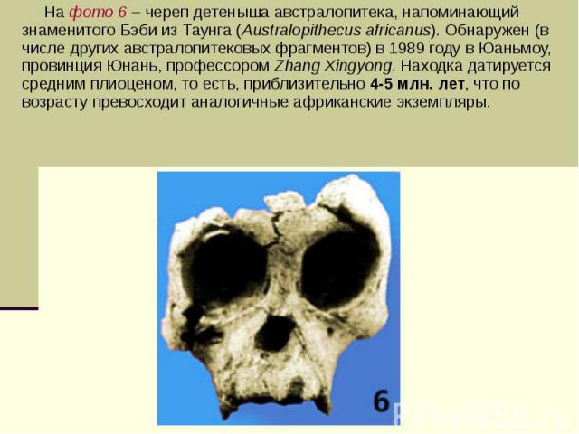 На фото 6 – череп детеныша австралопитека, напоминающий знаменитого Бэби из Таунга (Australopithecus africanus). Обнаружен (в числе других австралопитековых фрагментов) в 1989 году в Юаньмоу, провинция Юнань, профессором Zhang Xingyong. Находка дати…