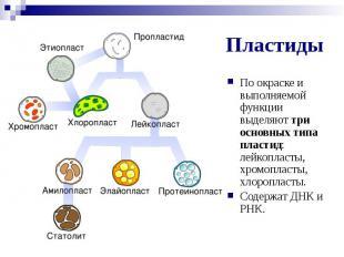 Пластиды По окраске и выполняемой функции выделяют три основных типа пластид: ле
