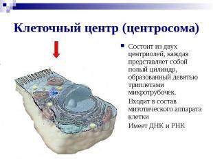 Клеточный центр (центросома) Состоит из двух центриолей, каждая представляет соб