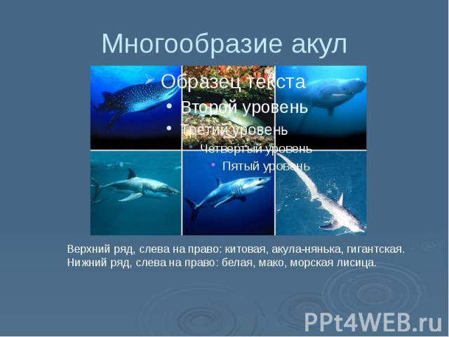 Многообразие акул