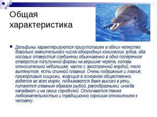 Общая характеристика Дельфины характеризуются присутствием в обеих челюстях дово