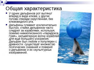 Общая характеристика У одних дельфинов рот вытянут вперед в виде клюва; y других