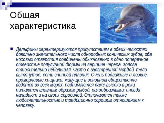Общая характеристика Дельфины характеризуются присутствием в обеих челюстях довольно значительного числа однородных конических зубов, оба носовых отверстия соединены обыкновенно в одно поперечное отверстие полулунной формы на вершине черепа, голова …
