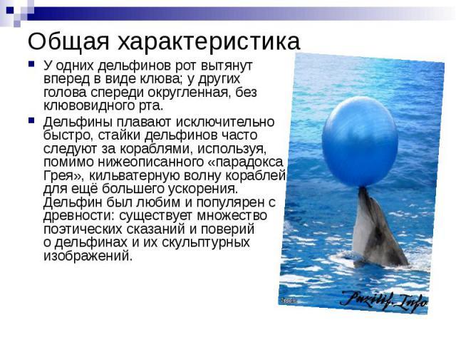 Общая характеристика У одних дельфинов рот вытянут вперед в виде клюва; y других голова спереди округленная, без клювовидного рта. Дельфины плавают исключительно быстро, стайки дельфинов часто следуют за кораблями, используя, помимо нижеописанного «…