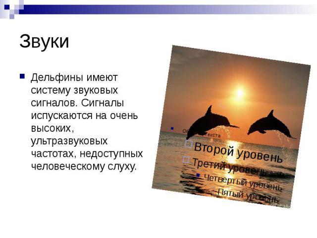 Звуки Дельфины имеют систему звуковых сигналов. Сигналы испускаются на очень высоких, ультразвуковых частотах, недоступных человеческому слуху.