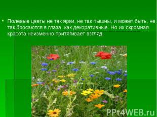 Полевые цветы не так ярки, не так пышны, и может быть, не так бросаются в глаза,