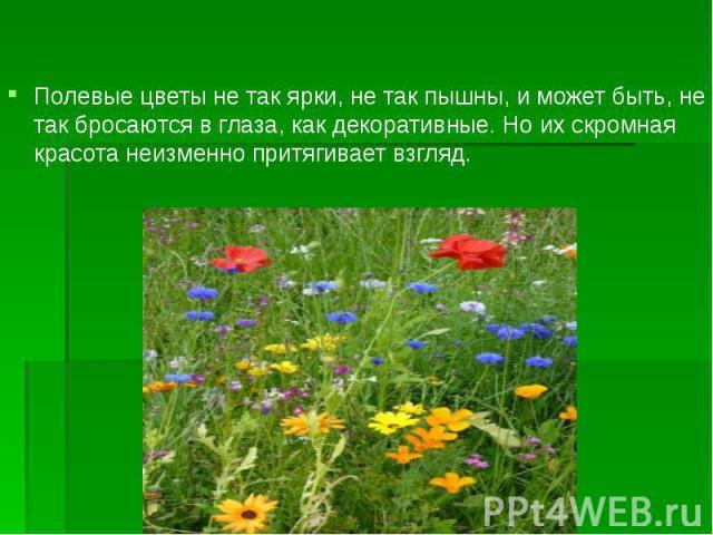 Полевые цветы не так ярки, не так пышны, и может быть, не так бросаются в глаза, как декоративные. Но их скромная красота неизменно притягивает взгляд. Полевые цветы не так ярки, не так пышны, и может быть, не так бросаются в глаза, как декоративные…