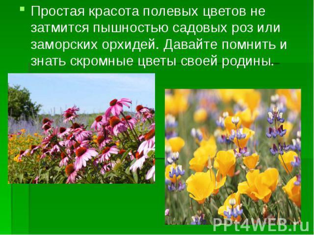 Простая красота полевых цветов не затмится пышностью садовых роз или заморских орхидей. Давайте помнить и знать скромные цветы своей родины. Простая красота полевых цветов не затмится пышностью садовых роз или заморских орхидей. Давайте помнить и зн…