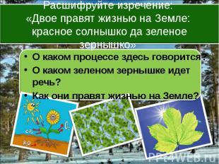 О каком процессе здесь говорится? О каком зеленом зернышке идет речь? Как они пр