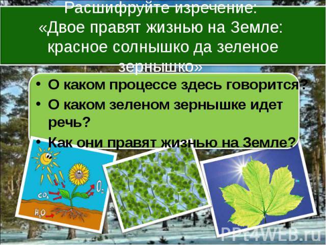 О каком процессе здесь говорится? О каком зеленом зернышке идет речь? Как они правят жизнью на Земле?