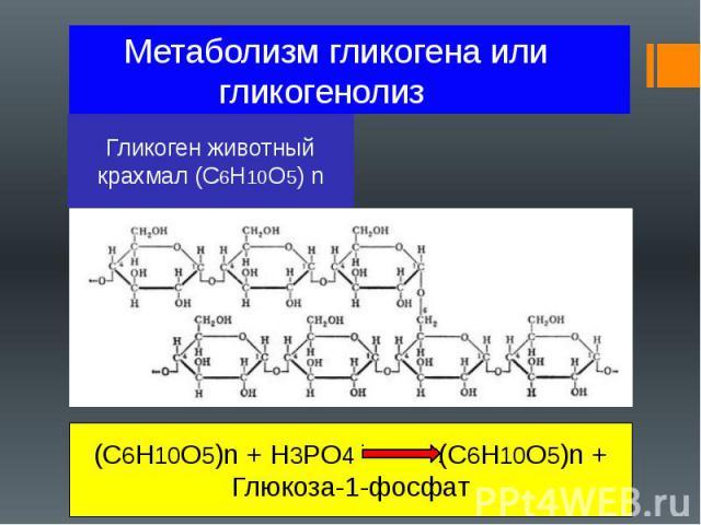 Метаболизм гликогена или гликогенолиз