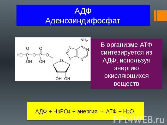 АДФ Аденозиндифосфат