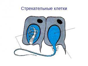 Стрекательные клетки