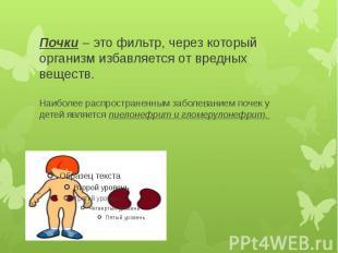 Почки– это фильтр, через который организм избавляется от вредных веществ.