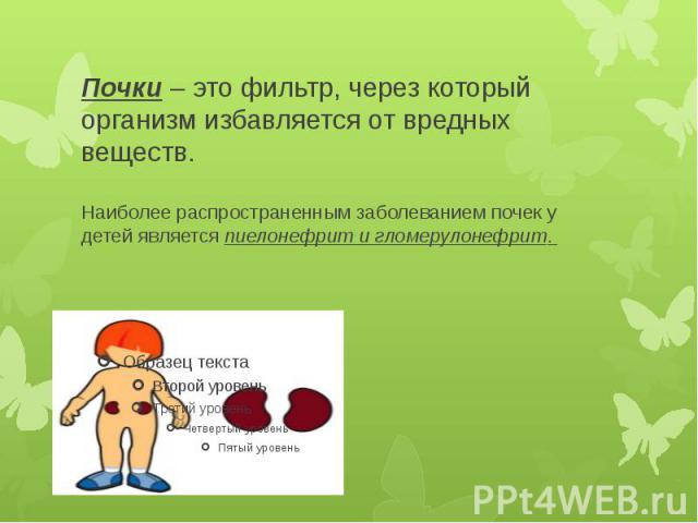 Почки– это фильтр, через который организм избавляется от вредных веществ. Наиболее распространеннымзаболеванием почек у детей являетсяпиелонефрит и гломерулонефрит.