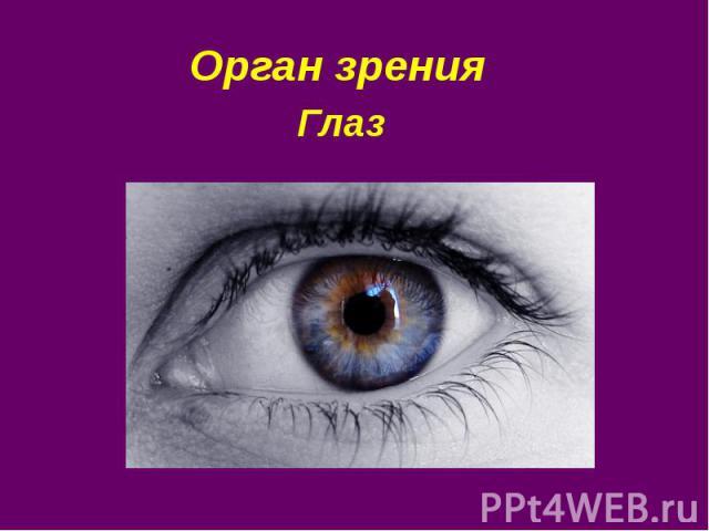 Орган зрения Глаз