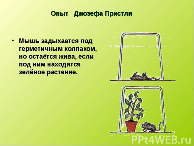 Мышь задыхается под герметичным колпаком, но остаётся жива, если под ним находится зелёное растение. Мышь задыхается под герметичным колпаком, но остаётся жива, если под ним находится зелёное растение.