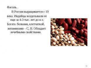 Фасоль. Фасоль. В России выращивается с 19 века. Индейцы возделывали ее еще за 4