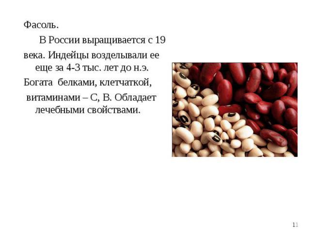 Фасоль. Фасоль. В России выращивается с 19 века. Индейцы возделывали ее еще за 4-3 тыс. лет до н.э. Богата белками, клетчаткой, витаминами – С, В. Обладает лечебными свойствами.