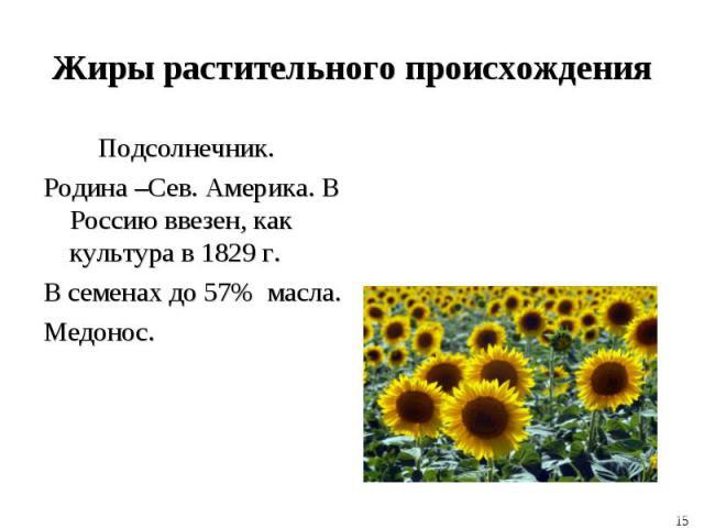 Подсолнечник. Подсолнечник. Родина –Сев. Америка. В Россию ввезен, как культура в 1829 г. В семенах до 57% масла. Медонос.