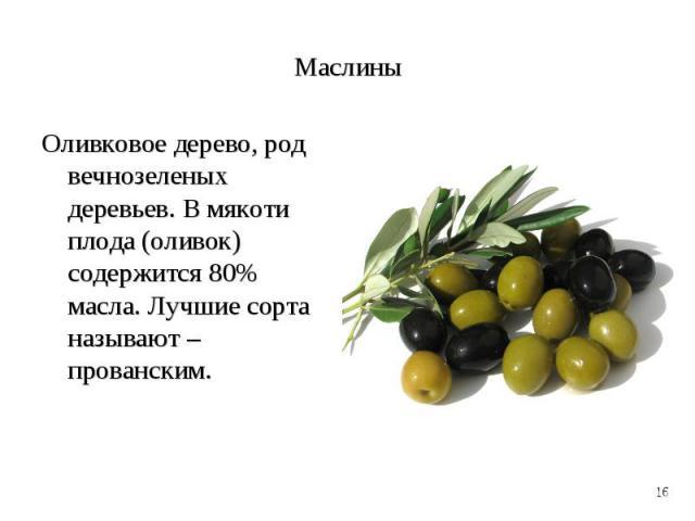 Оливковое дерево, род вечнозеленых деревьев. В мякоти плода (оливок) содержится 80% масла. Лучшие сорта называют – прованским. Оливковое дерево, род вечнозеленых деревьев. В мякоти плода (оливок) содержится 80% масла. Лучшие сорта называют – прованским.